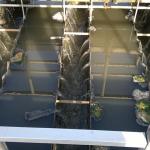 miljövatten - avloppsvatten